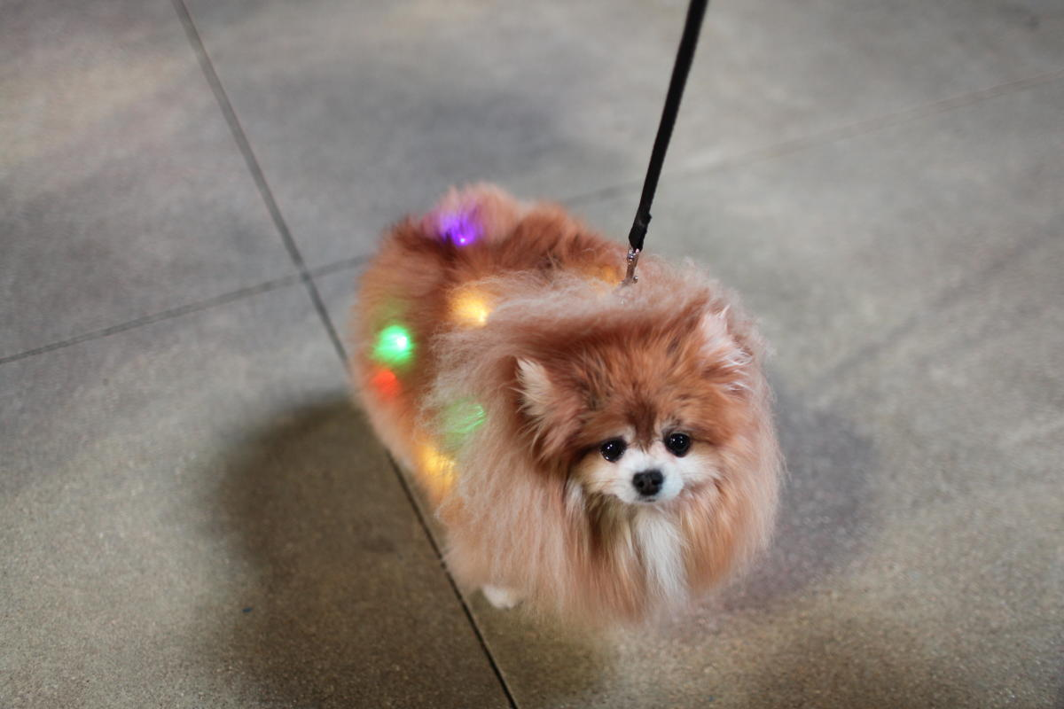 Christkindl dog