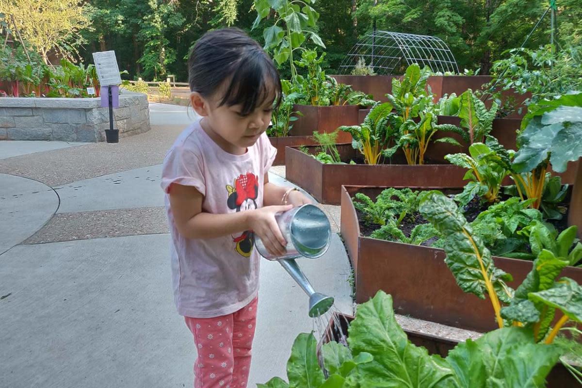 child watering plants at children's garden