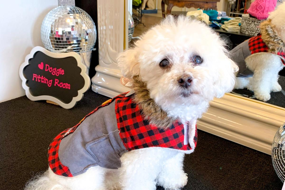 Dog Posing at Puppy Love Dog Boutique