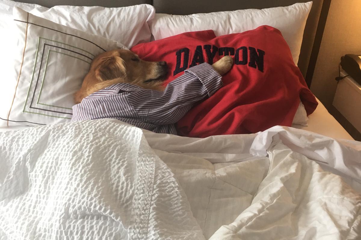Dreaming of Dayton Zoom