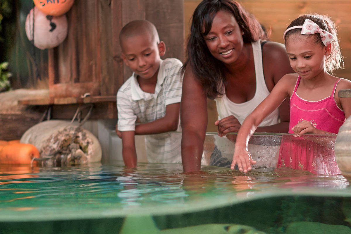 Mom and Kids petting stingrays at the Fort Wayne Children's Zoo