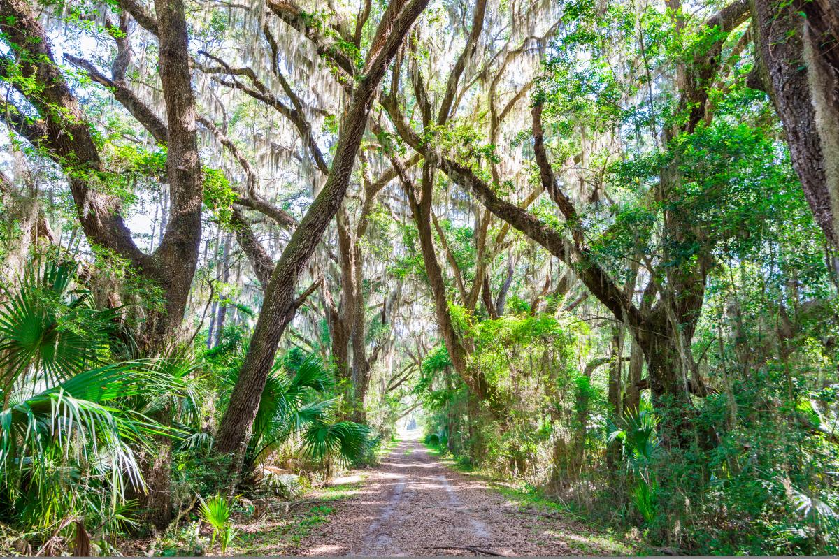 An ancient maritime forest at Cannon's Point Preserve on St. Simons Island