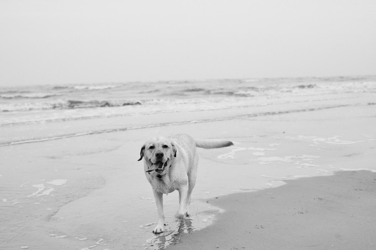 A dog running on the sand of East Beach on St. Simons Island