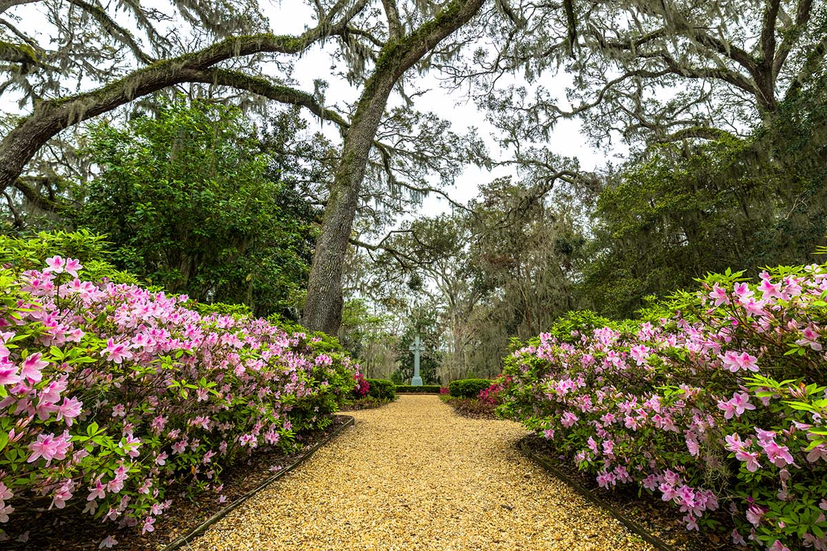 Thousands of colorful azaleas bloom each year at the Wesley Memorial Gardens on St. Simons Island, GA