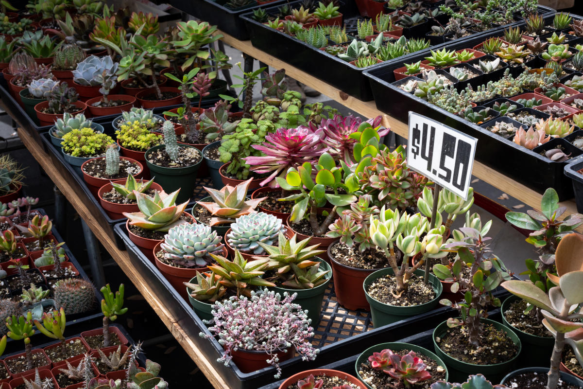 Succulents line the table at the Orange County Great Park Farmers Market.