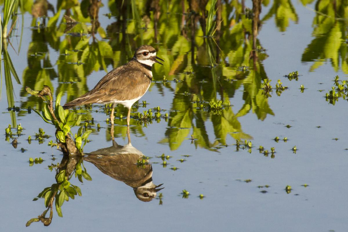 Bird and its reflection at San Joaquin Sanctuary