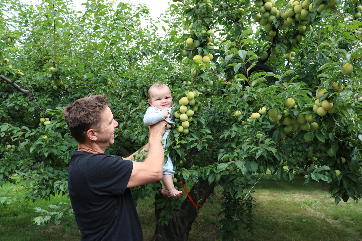 Fruit Picking with Baby