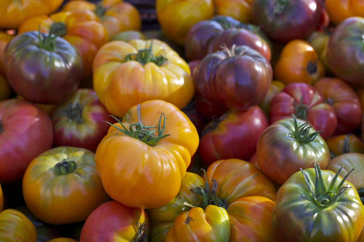 Lane County Farmers Market Tomatoes by Stephanie Ames