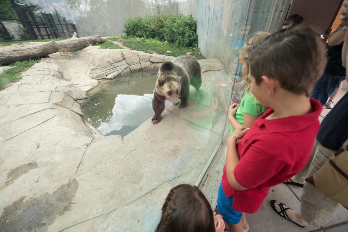Children observe a bear at Henry Vilas Zoo