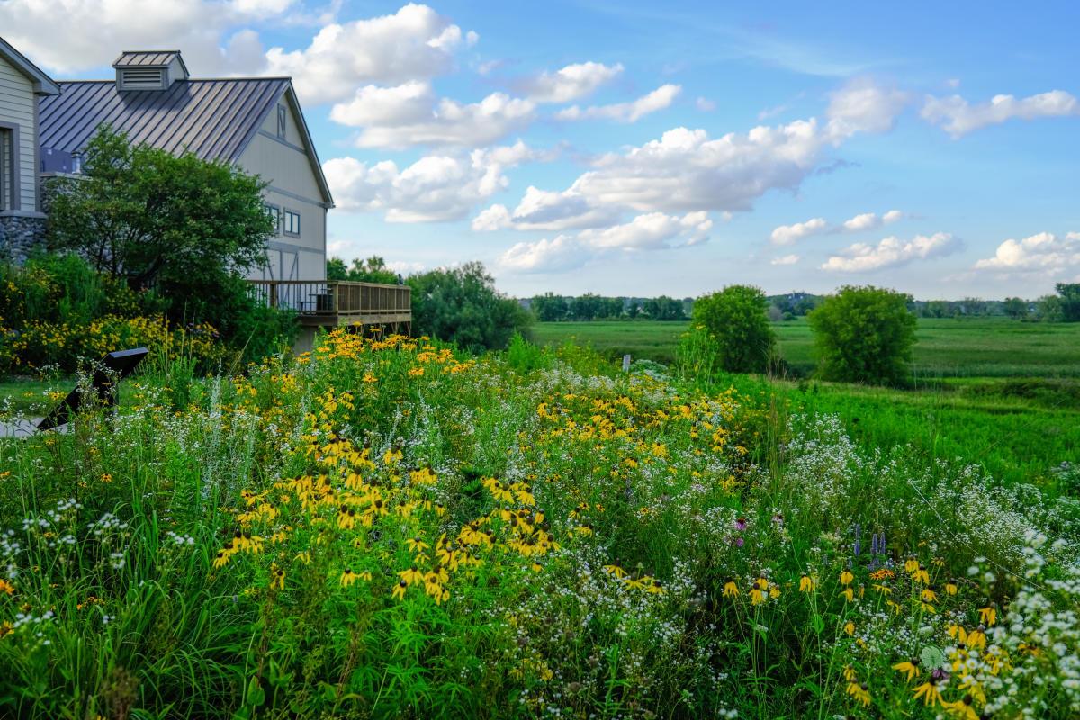 Flowers fill a prairie near the Lower Yahara River Trail