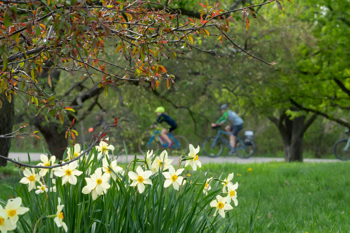 Cyclists bike through the UW-Arboretum