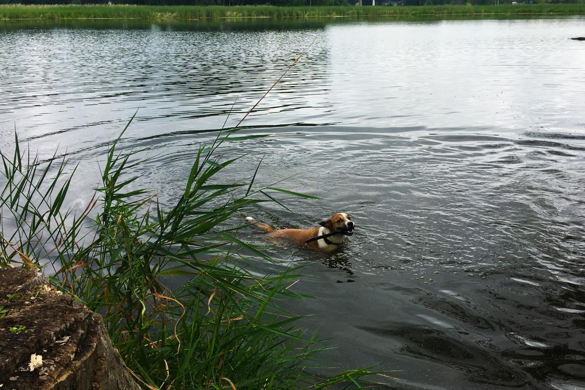 A dog swimming the lagoon at Warner Park