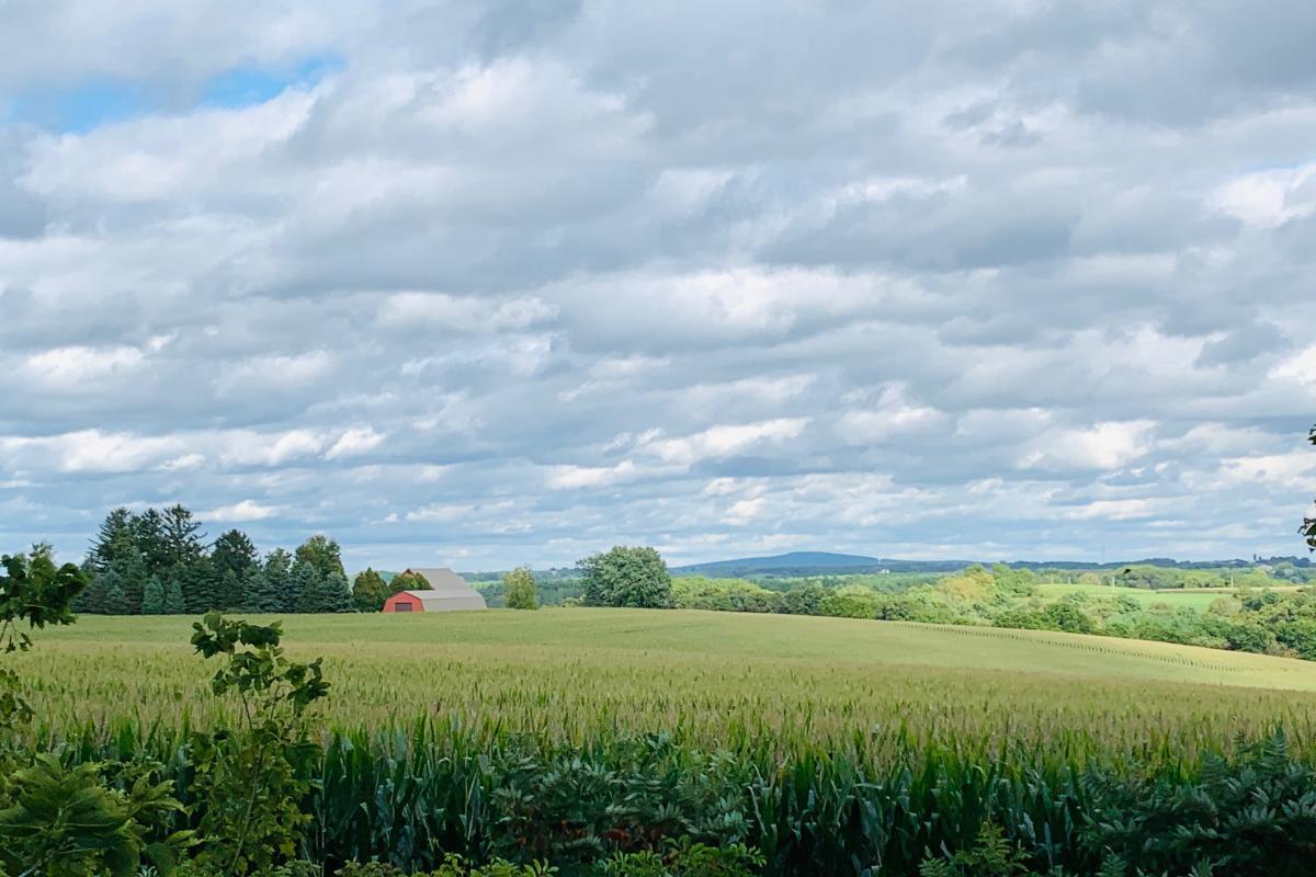 A corn field off of Military Ridge State Trail