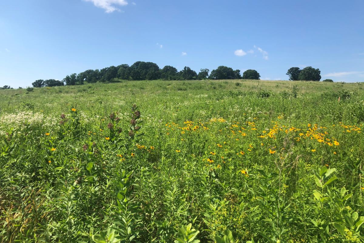 A prairie at Pheasant Branch Conservancy