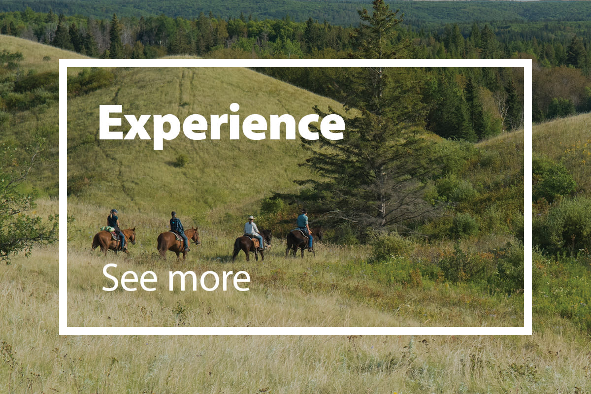 Experience Manitoba - From Home