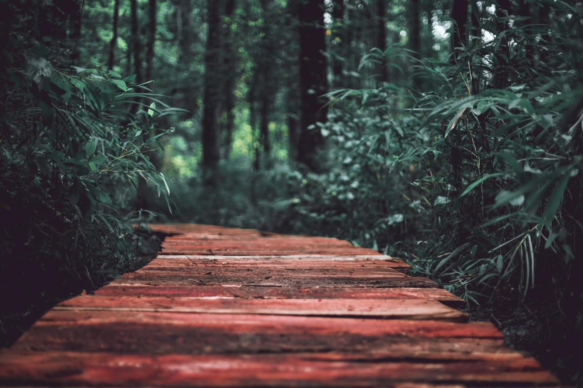 Bartram Forest