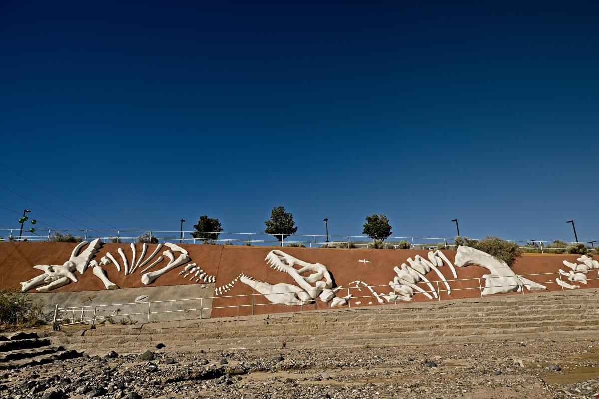 """Fossils"" line an arroyo's walls, Albuquerque, New Mexico Magazine"