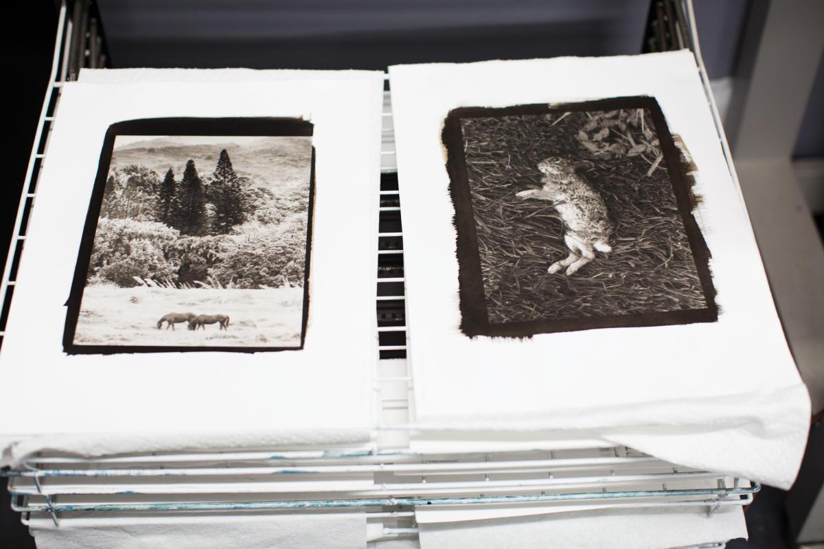 Dana Sullivan of Bostick & Sullivan Photography Prints