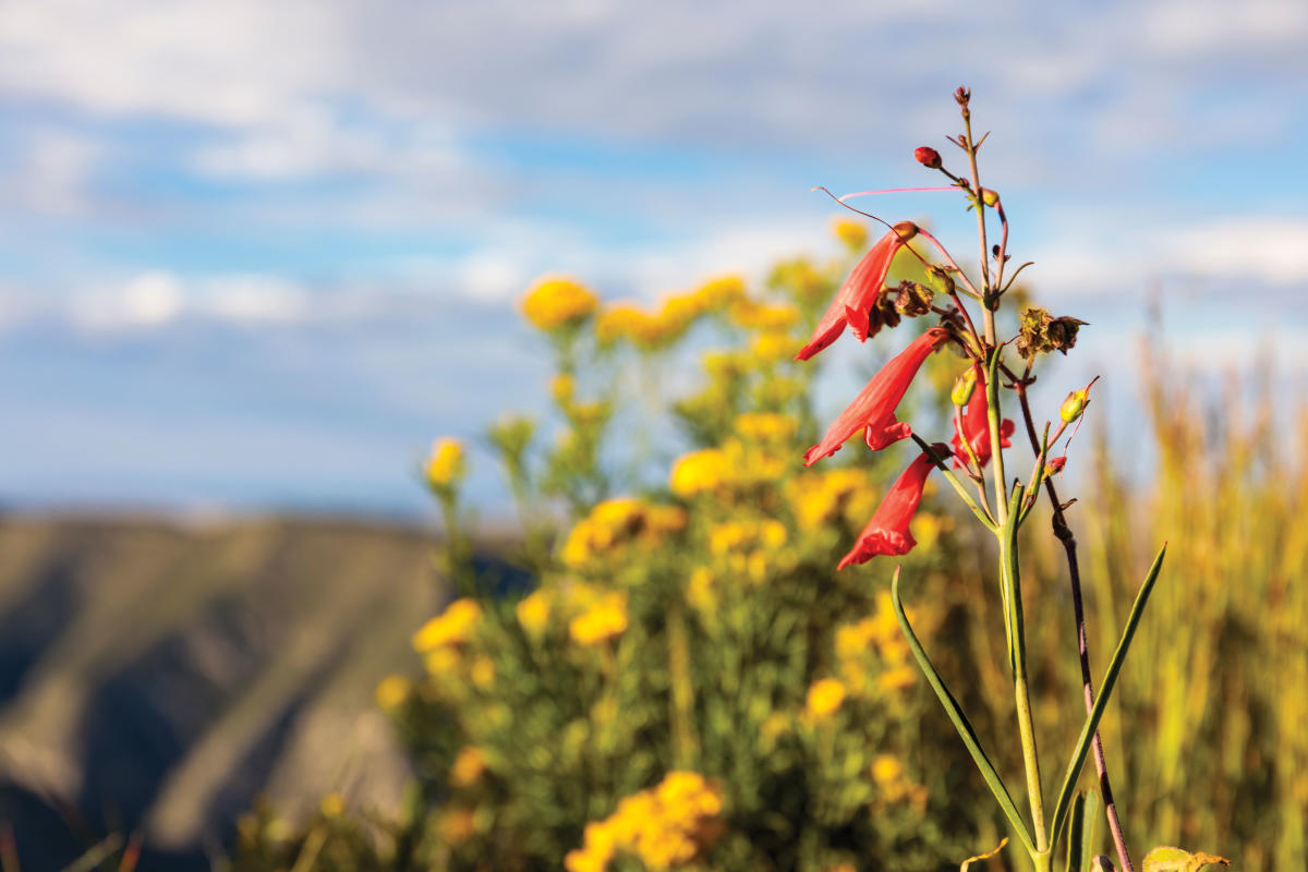 Trail Delights include wildflowers and an obelisk that marks the summit