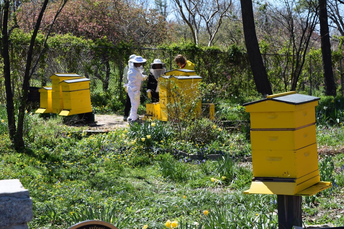bee garden, queens botanical