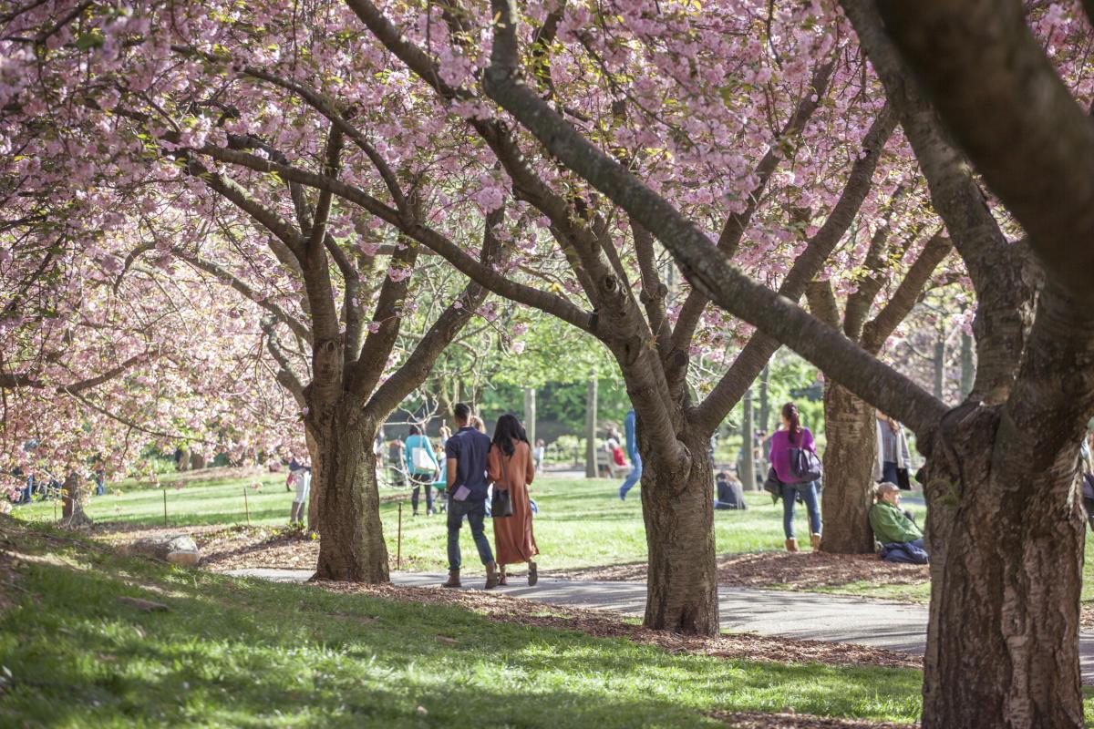 Brooklyn-Botanic-Garden-Brooklyn-NYC-Tagger-Yancey-IV_6975