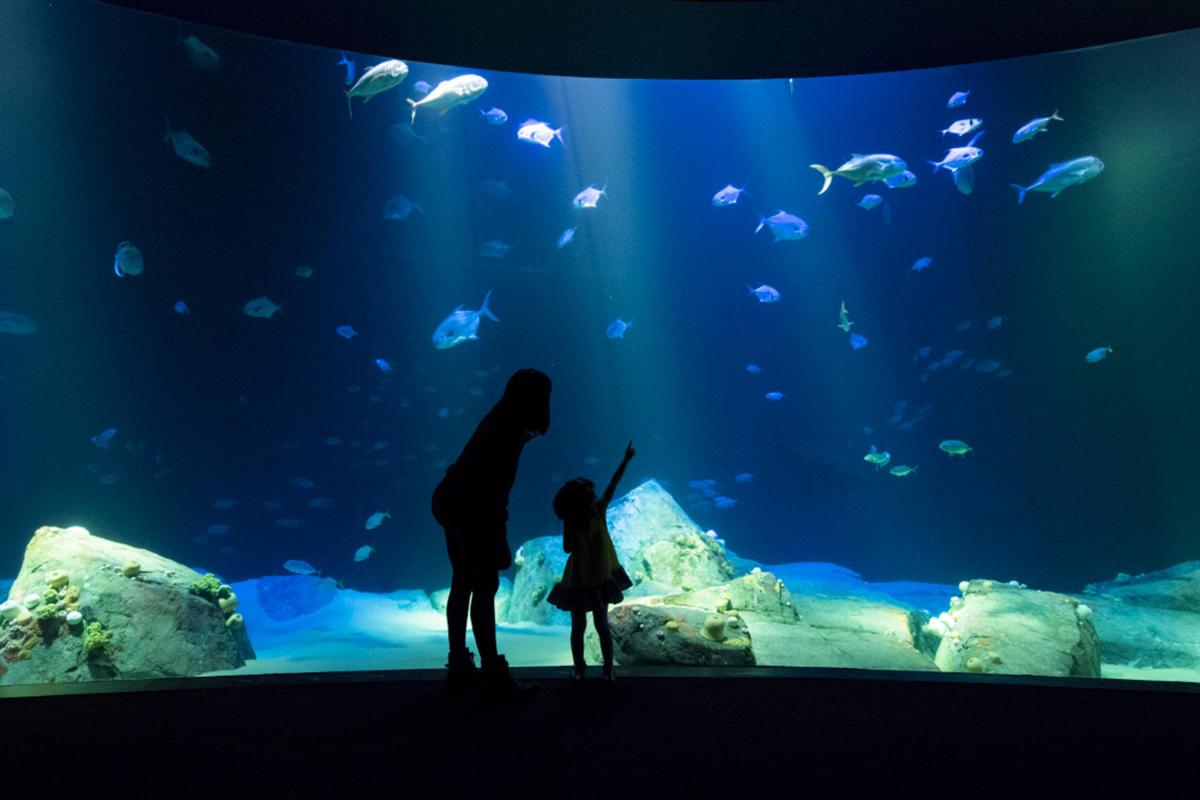 ocean wonders, coney island aquarium