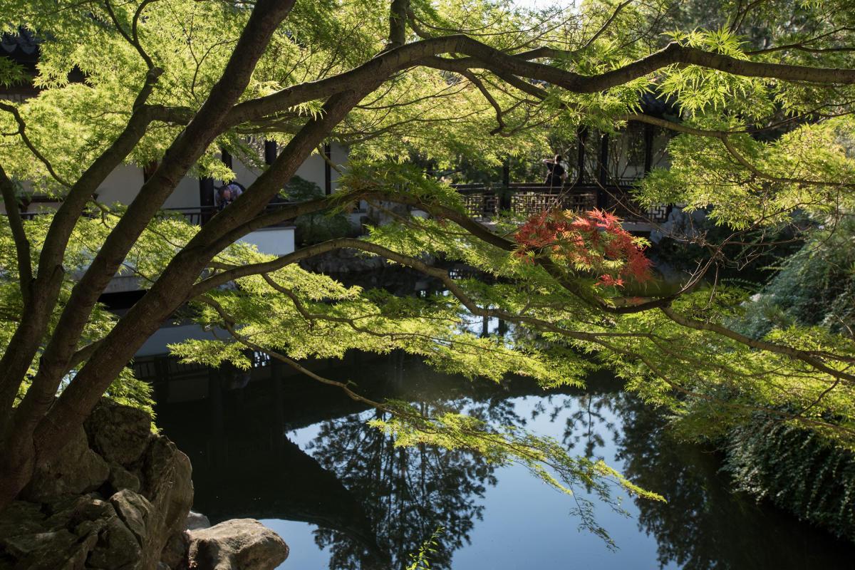 snug harbor, chinese scholar garden