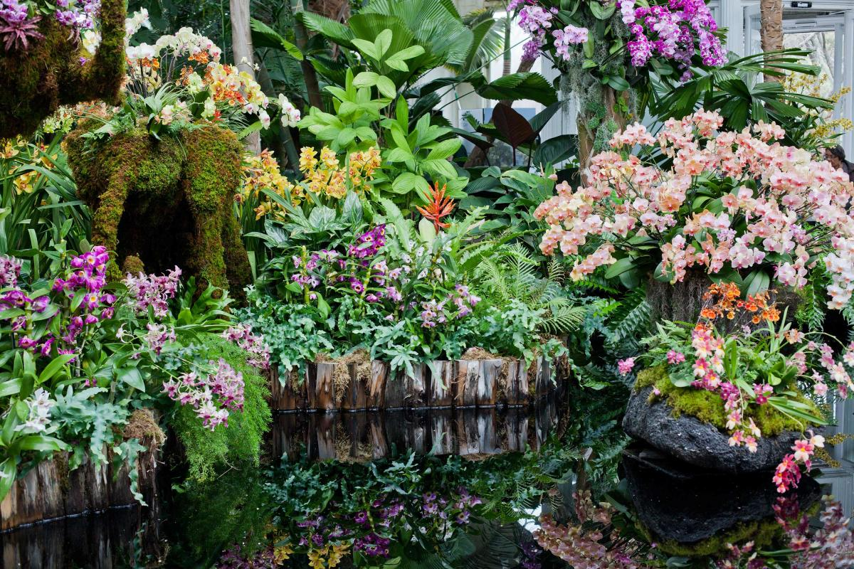 orchid show, nybg