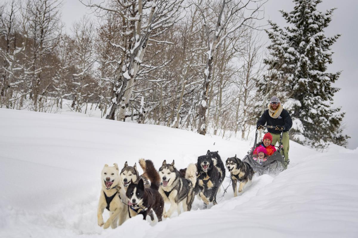 Dogs charging through fresh snow pulling sled with smiling mother and daughter.