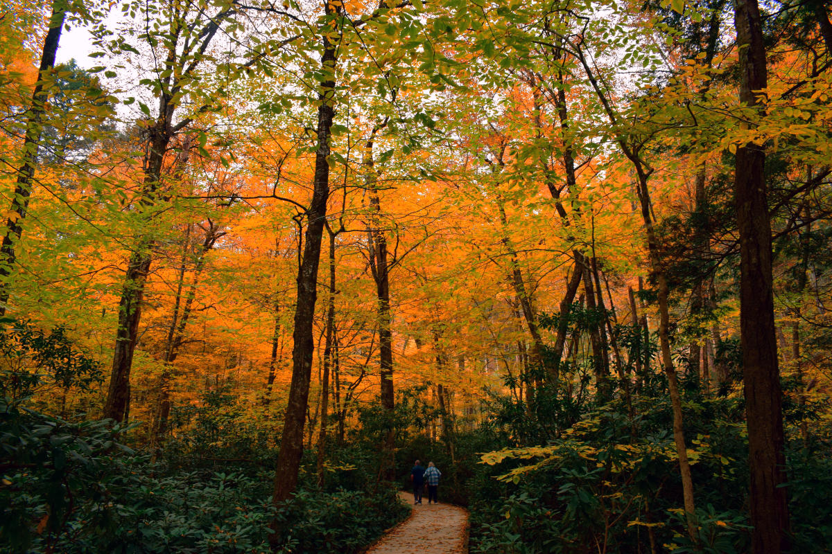 View the Fall Foliage in Pocono Mountains From Above