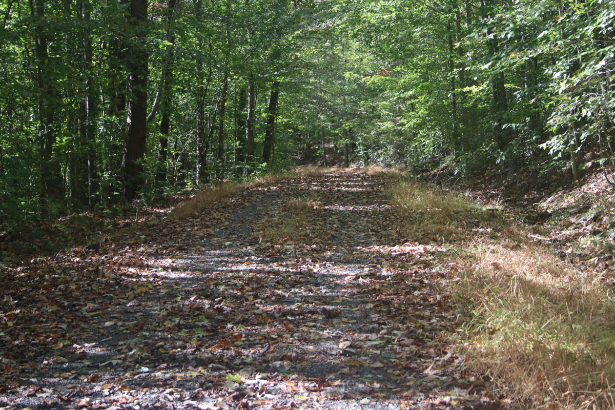 Tree lined Liming Lane Trail during early fall at Prince William Forest Park