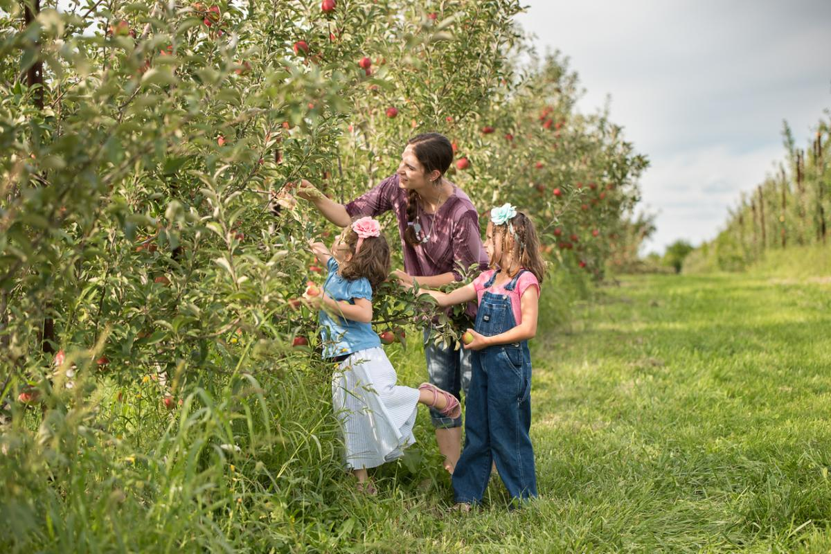 Picking Apple Holler