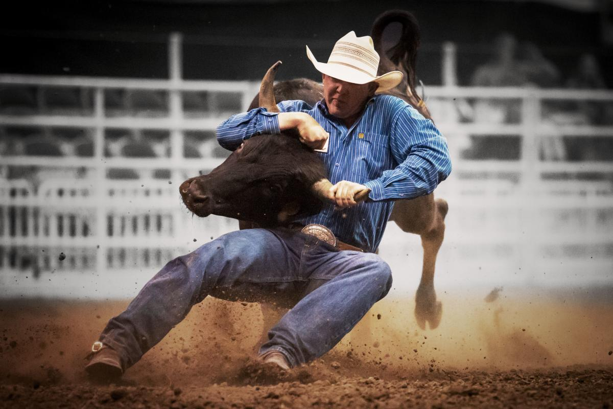 Steer Wrestling at Days of '47 Cowboy Games and Rodeo