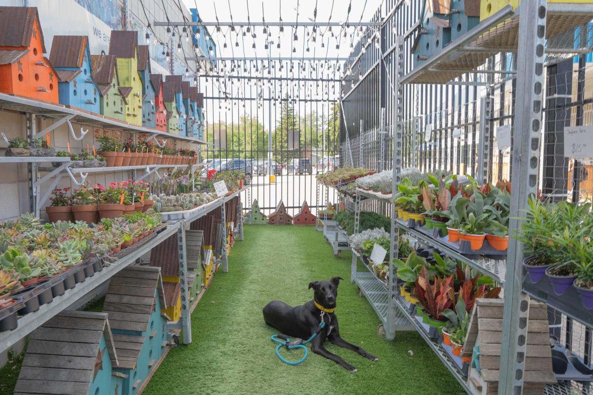 Dog Laying Inside Solar Gardens in Saskatoon