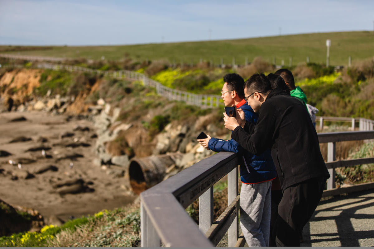 Men overlooking Elephant Seals