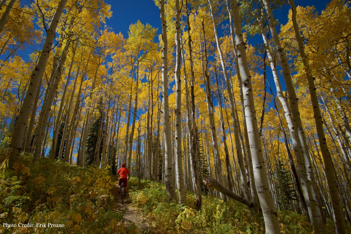Flash of Gold mountain biking trail recently opened on Buffalo Pass