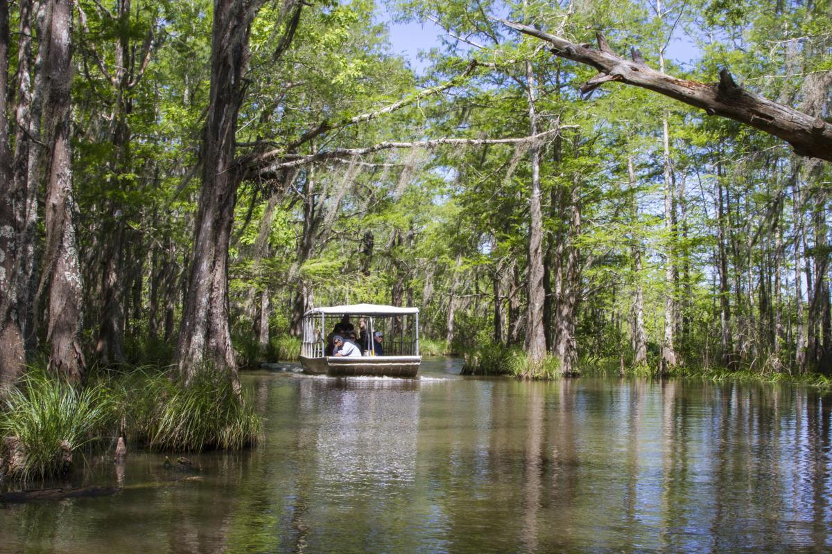 Honey Island Swamp Boat Tour