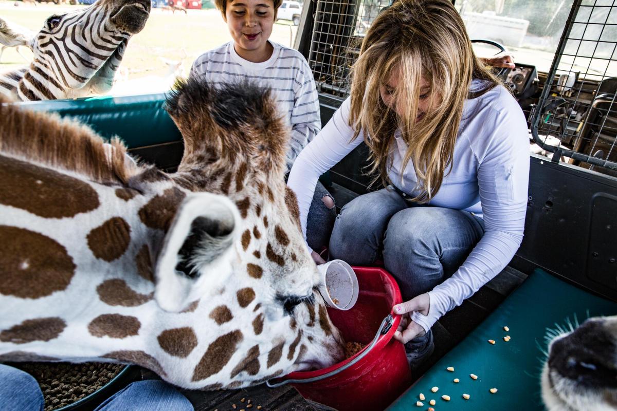 Feeding Giraffes, Global Wildlife