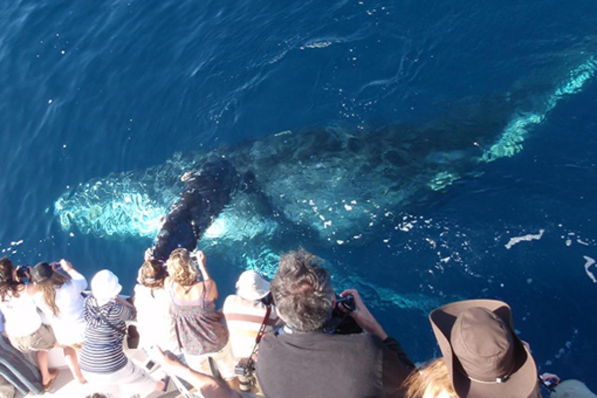 DTN - EL - Newport Landing Whale Watching