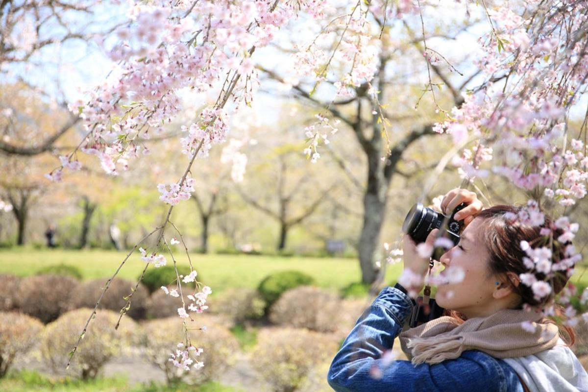 woman taking photo of white flowers