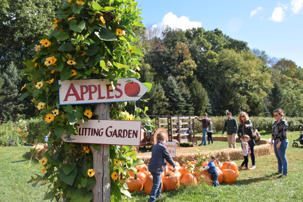 Apple Picking at Solebury Orchards