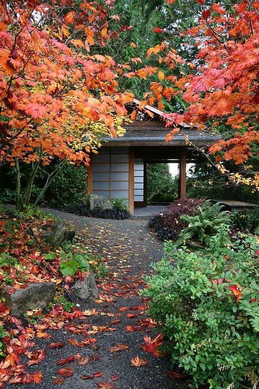 Bellevue Botanical Garden Tateuchi in Autumn
