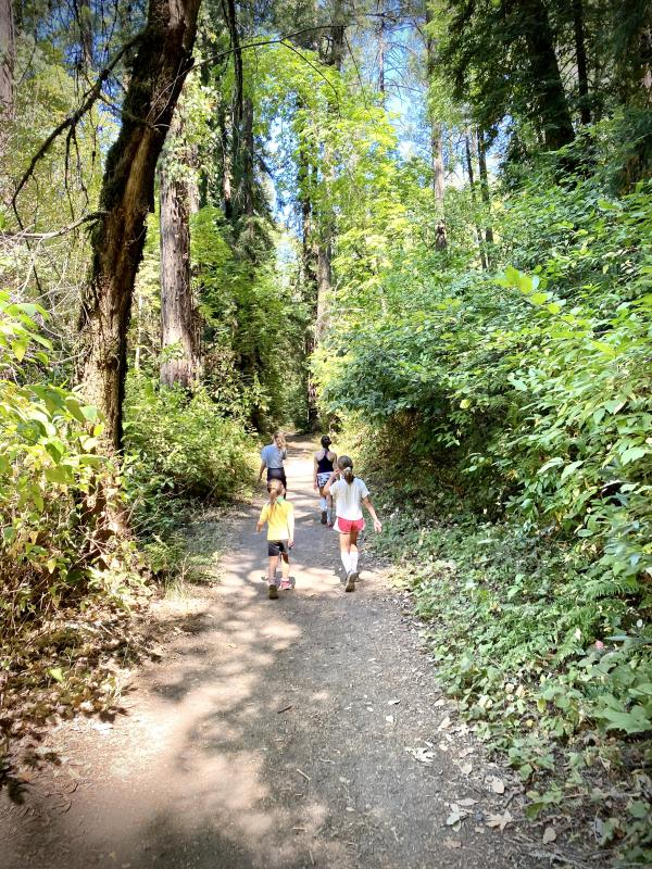 A group of kids explore a tree-lined trail at Bothe Napa State Park.