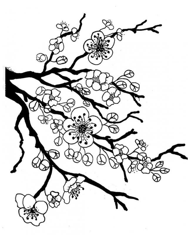 Cherry Blossom Coloring Page 3