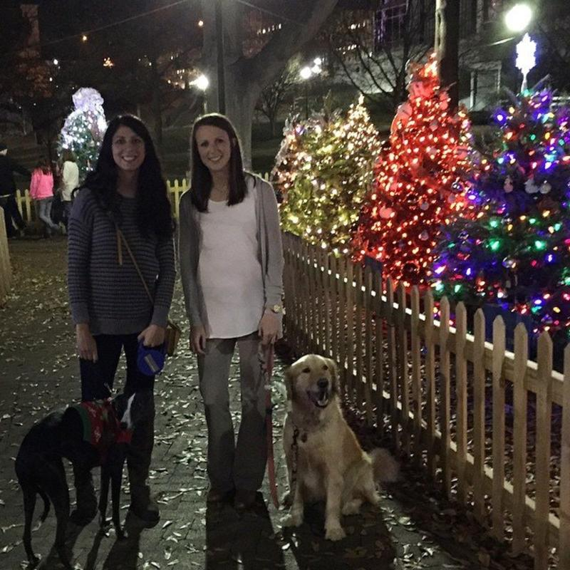 Tinsel Trail Christmas Dogs