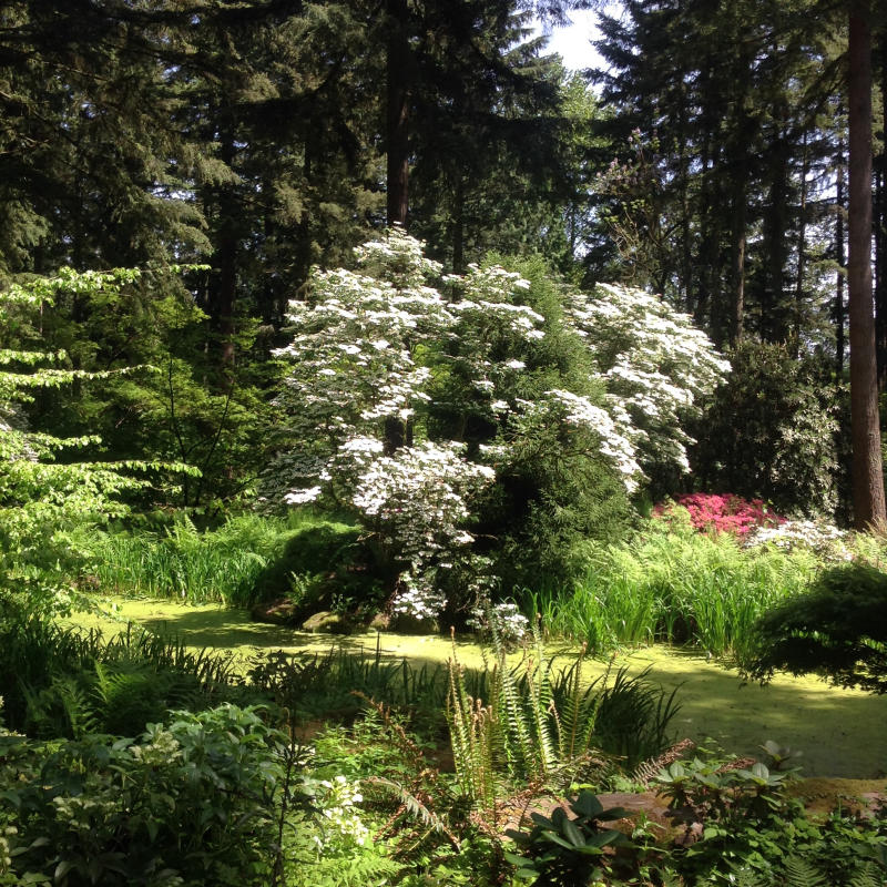 rhododendrons and greenery in forest