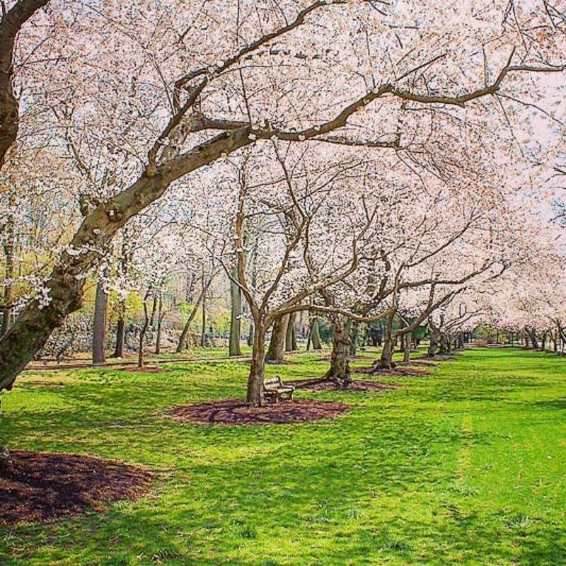 Brandywine Park - IG Blog