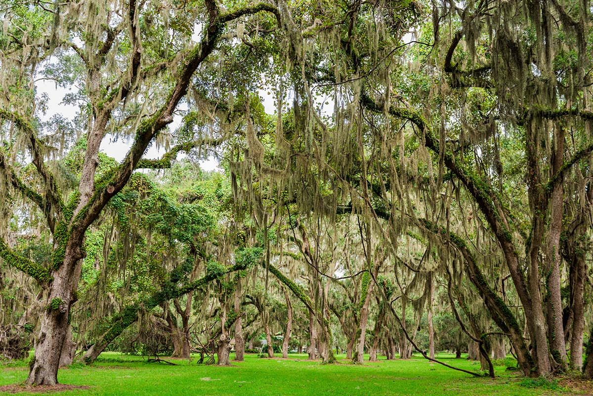 Ancient live oak trees create a dramatic setting at Mallery Park on St. Simons Island, GA