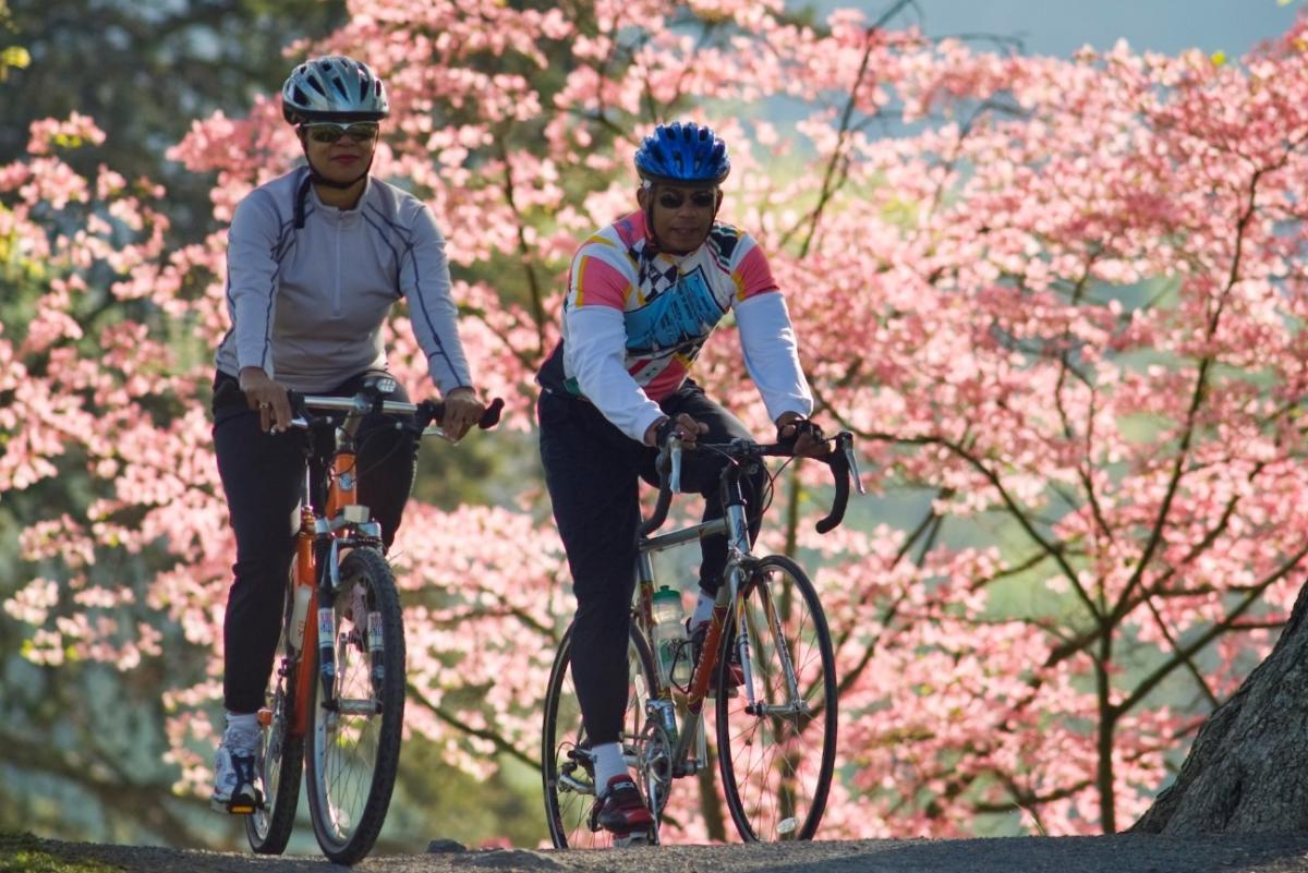 Biking Along the Dogwood Trails