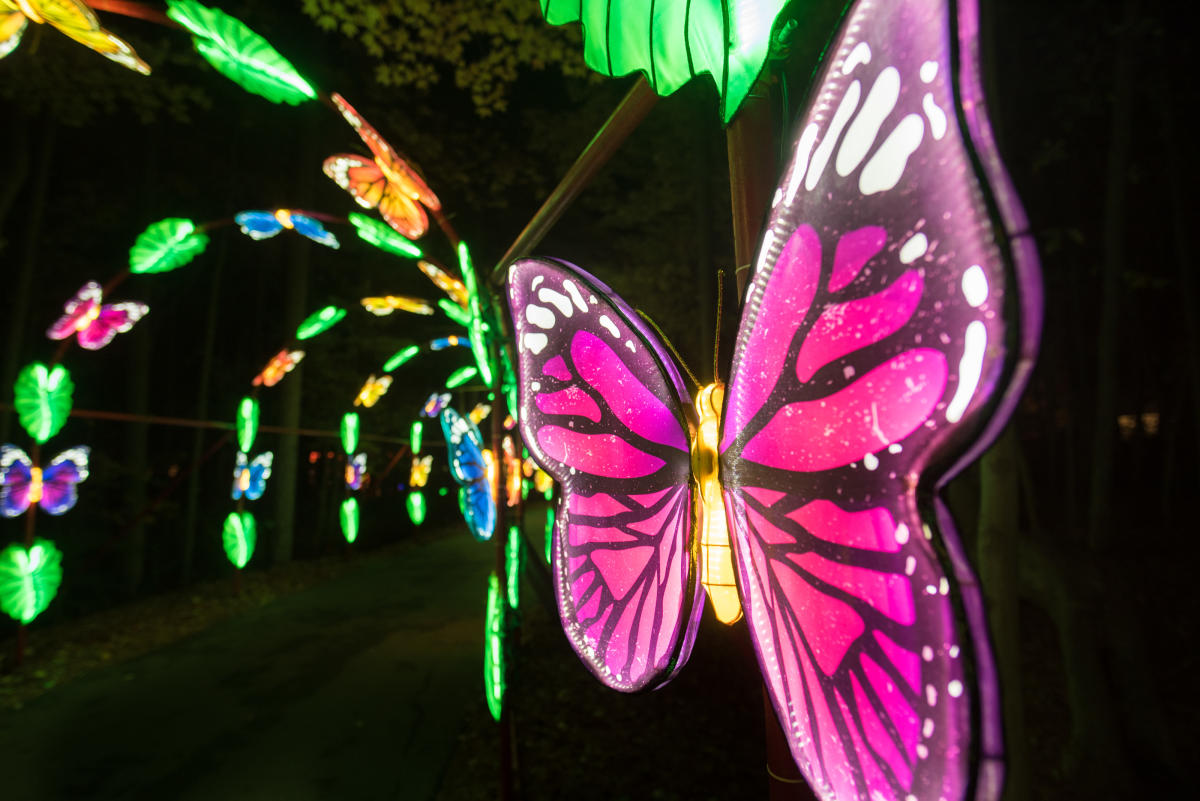 Chinese Lantern Festival Butterfly